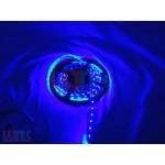 Banda cu 60 leduri albastru (LEDRGB3528I) - www.lutek.ro